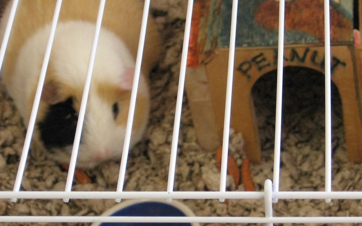 Zdjęcie znalezione na Blogspot.com