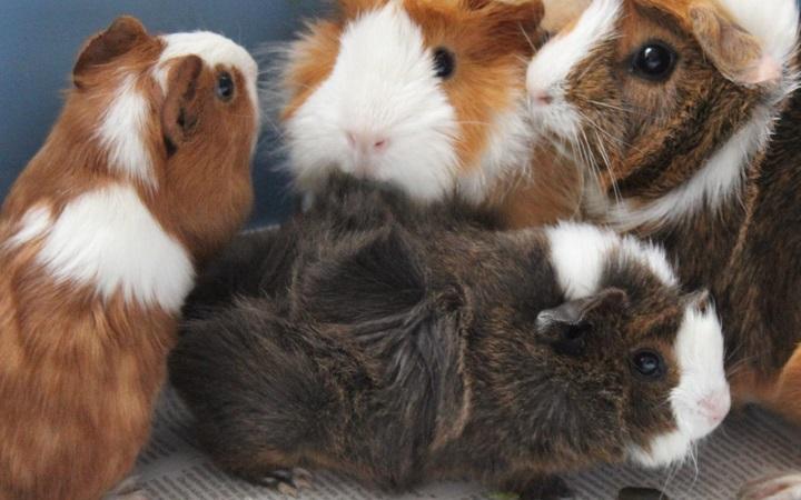 Zdjęcie ze strony Animalrescueandcare.org.uk